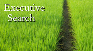 Nonprofit Executive Search Field